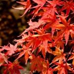紅葉の写真の撮り方。どうすればきれいに撮れる? 大阪のおすすめ場所と風景写真の印刷方法を紹介。