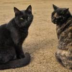 猫背を治す座り方を紹介。