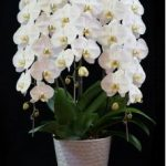 初盆のお供え花に胡蝶蘭はふさわしい?贈る時のマナー