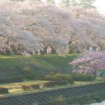 春に家族で行きたい芝桜の名所はここ!  関西・三田ほか